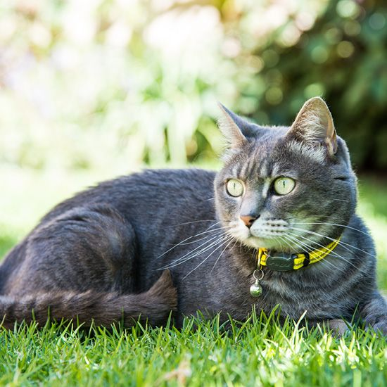 Kattenhalsband AlleyCat Geel