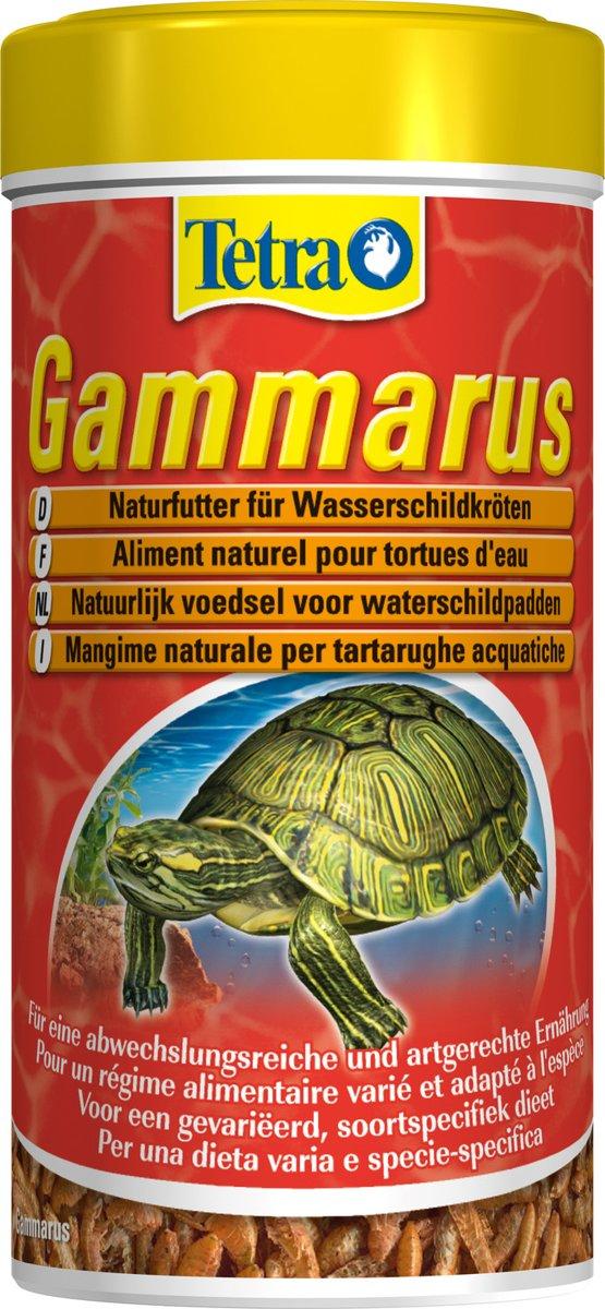 Tetra gammarus schildpadvoer