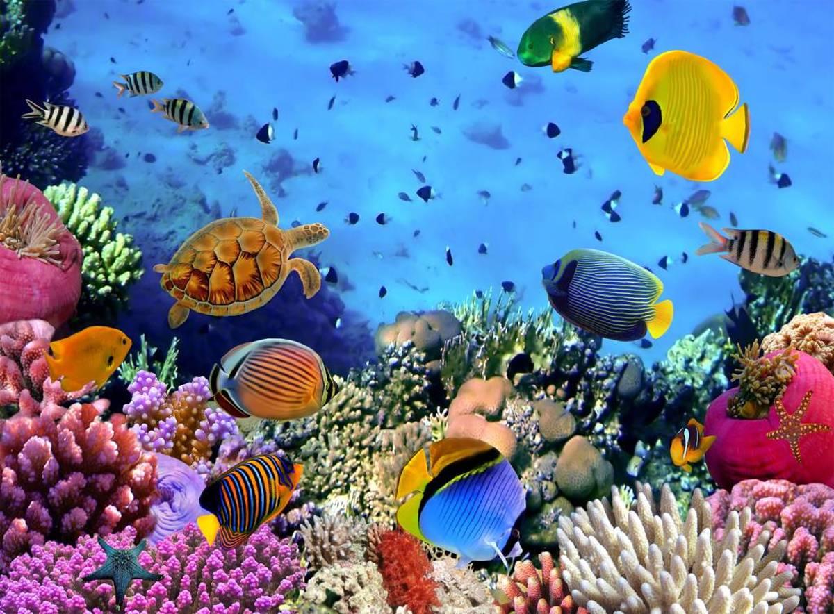 Onder de zee - 232 cm x 315 cm - Multi