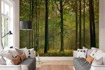 Fotobehang Herfst in het Bos (366 x 254 cm)